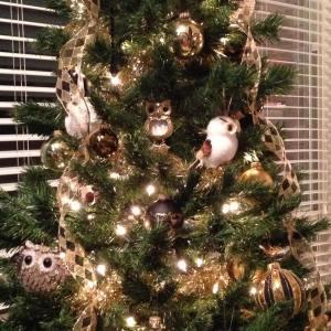 Christmas Tree 14b