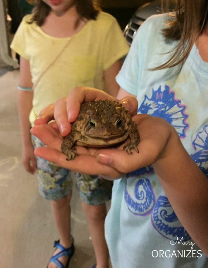 our pet frog - say hello to our little friend