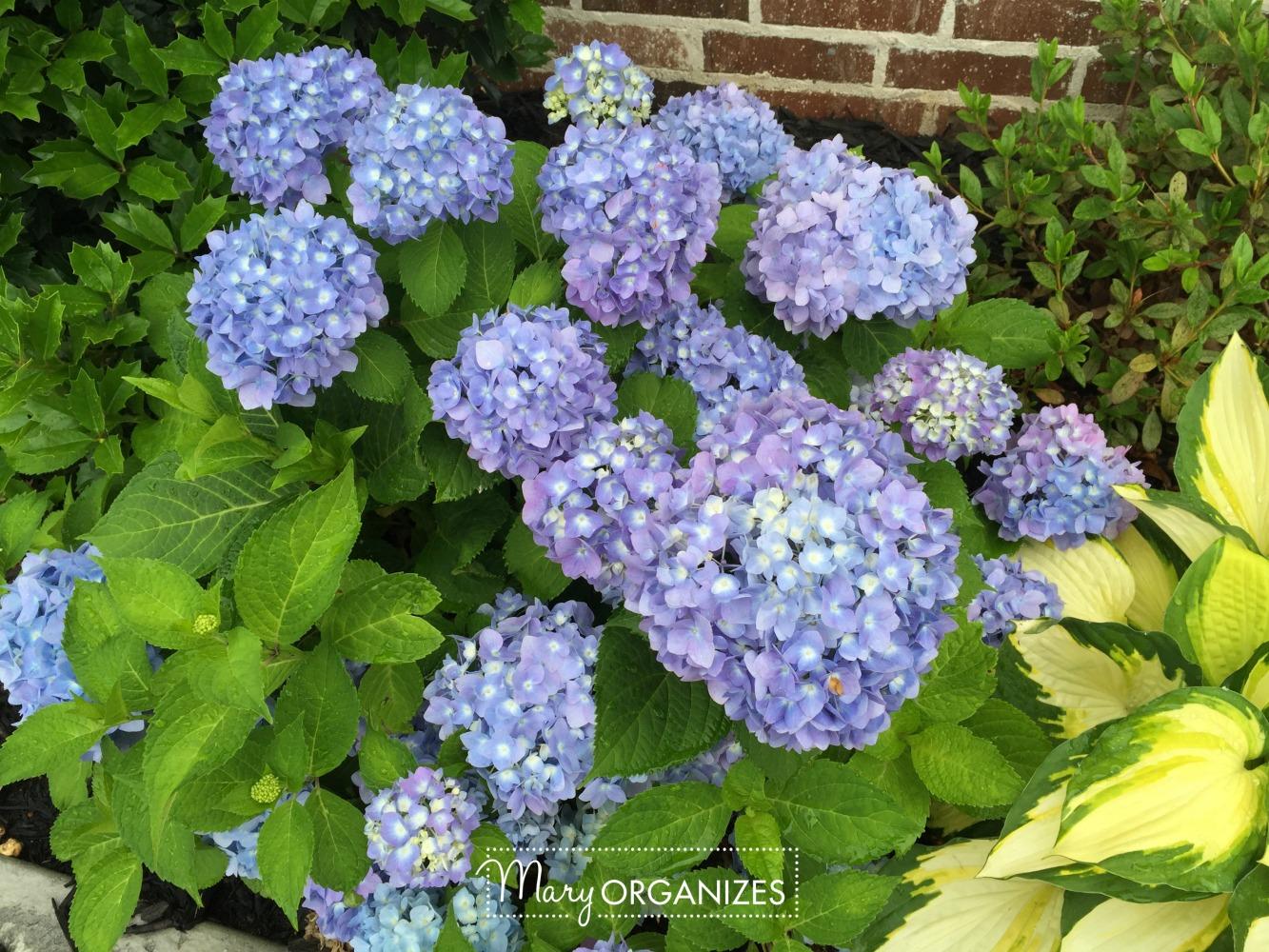 Planter Refresh and Hydrangea Propagation 11