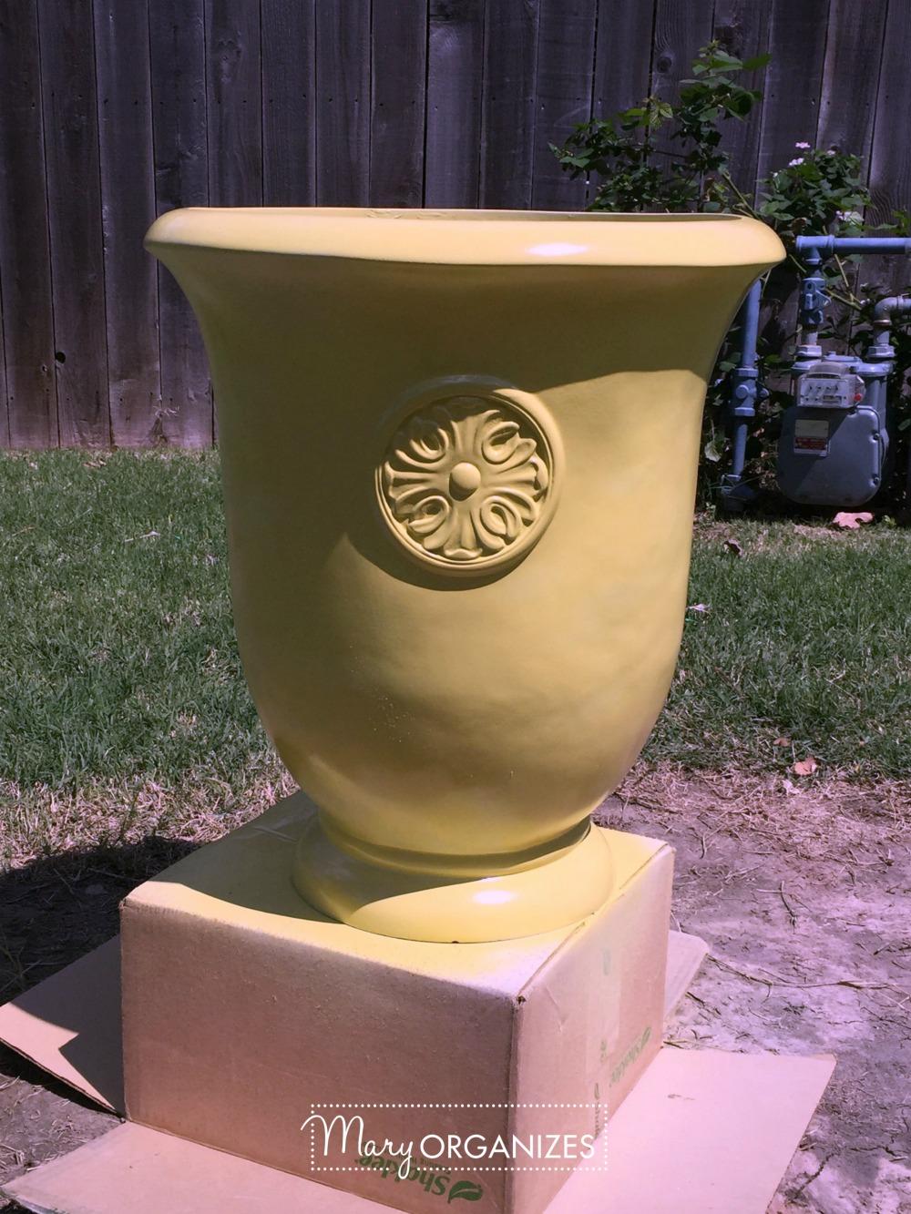 Planter Refresh and Hydrangea Propagation 9