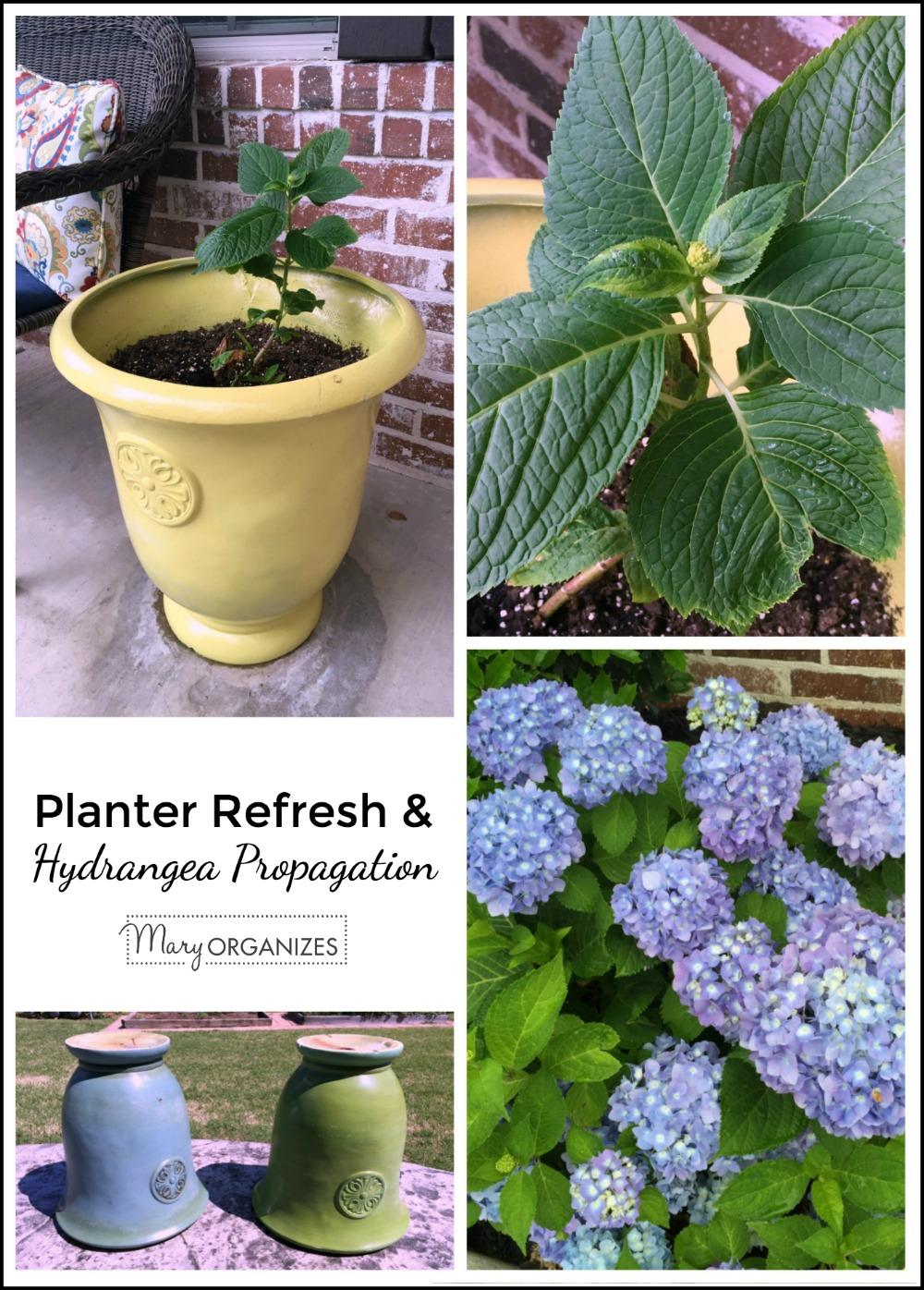 Planters Refresh and Hydrangea Propagation - creatingmaryshome.com
