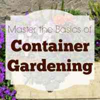 How to Master the Basics of Container Gardening