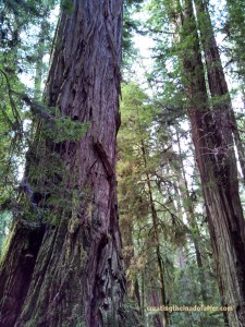 The trees of southern Oregon