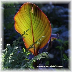 oregon flowers