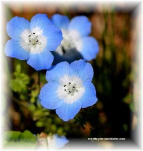 wildflowers in Oregon