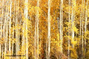 autumn leaves shaun brink