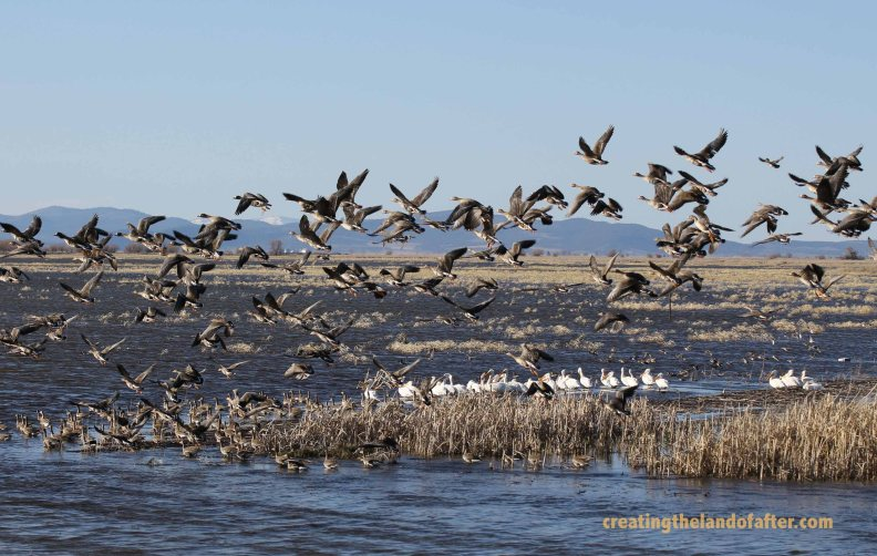 Bird refuge near klamath Falls Oregon