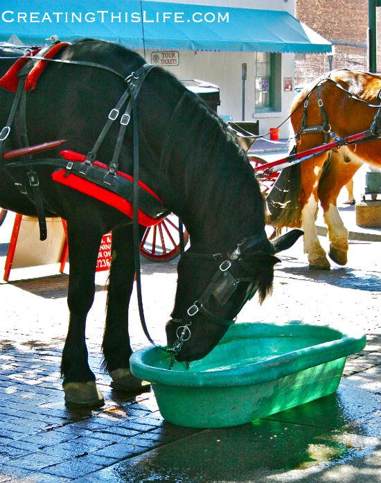 Savannah Horse