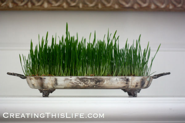 Live-Easter-Grass-in-Silverplate-tray