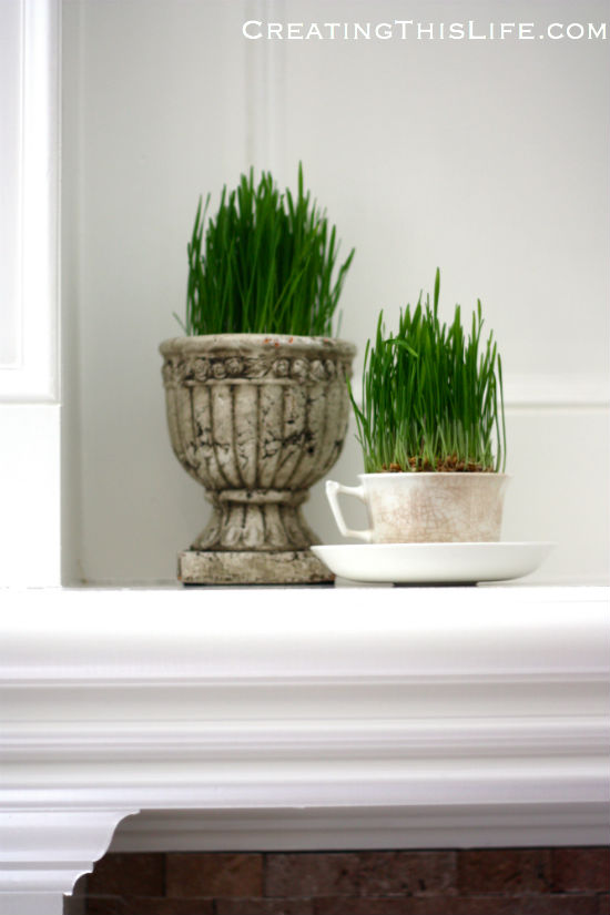 easter-grass-grown-in-concrete-planter-and-ironstone-cup