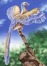 Archaeopteryx artist reconstruction