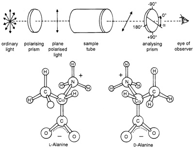 Optical activity and chirality. Ordinary light consists of waves vibrating in all possible directions perpendicular to its path. Certain substances will selectively transmit light waves vibrating only in a specific plane — plane polarised light. Most compounds isolated from natural sources are able to rotate the plane of polarised light a characteristic number of degrees for any specific substance. The significance of this phenomenon to molecular biology and the origin of life is that stereoisomers, molecules of identical but mirror image structure, possess such 'optical activity'. For example, in the case of the stereoisomers of the amino acid alanine shown above, L-alanine will rotate the plane of polarised light in the opposite direction to Dalanine. Why biological systems utilise exclusively levorotatory (left-handed) amino acids and dextrorotatory (right-handed) sugars remains unfathomable. Mixtures of organic compounds synthesised in Urey-Miller type experiments always consist of racemic (equal amounts of left-and right-handed) mixtures.