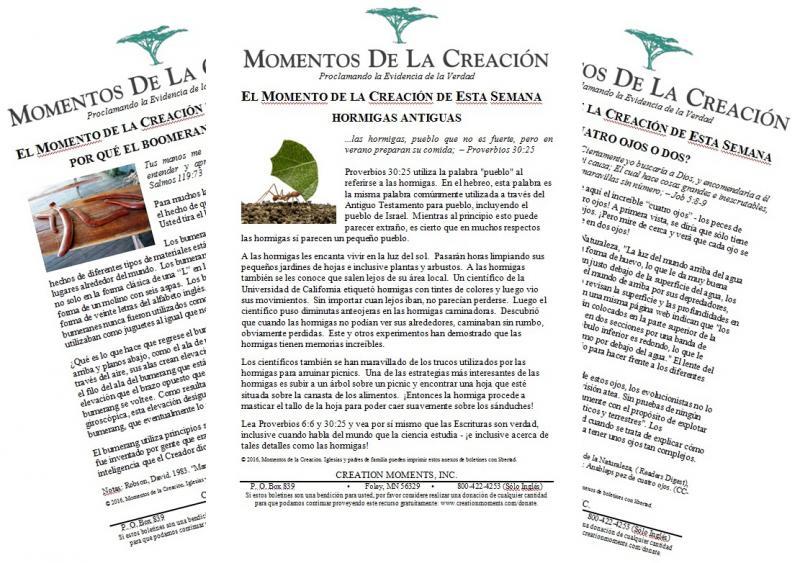 Spanish bulletin inserts