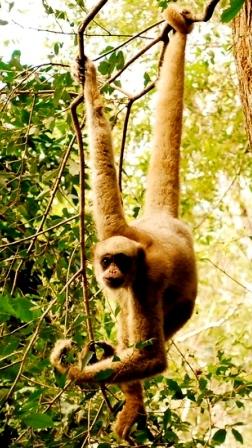 20-monkey-medicine