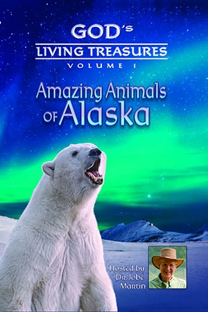 amazing-animals-of-alaska-2