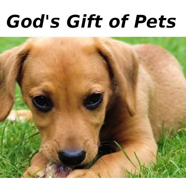 Gods gift of pets v1 t23