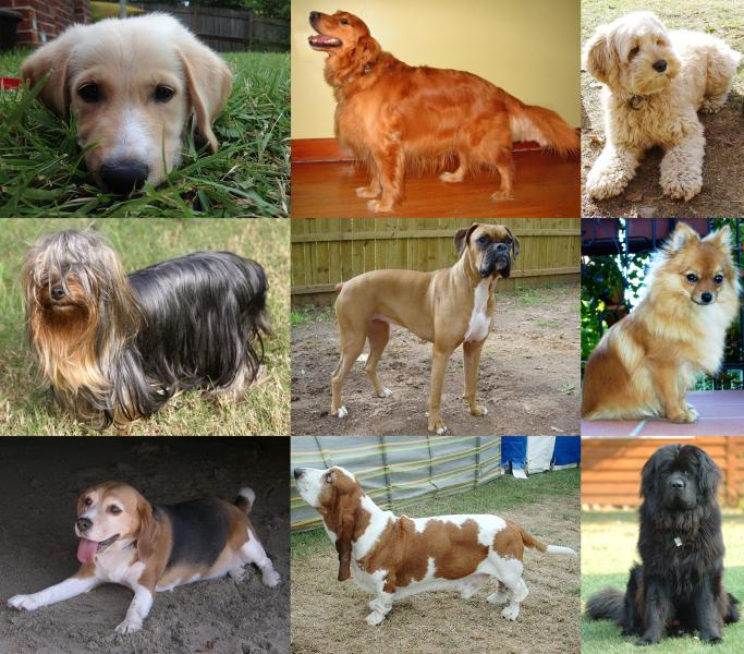Difference types of large, medium and small dogs