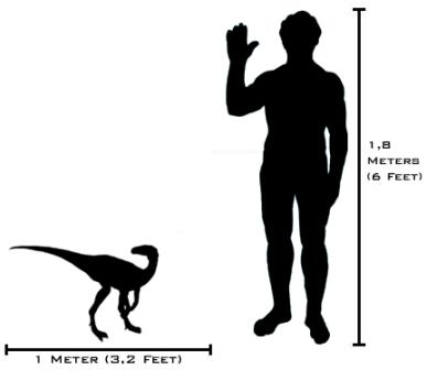Many dinosaurs – such as the Eoraptor – were no larger than a dog