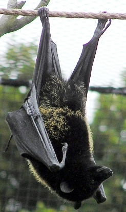 The Bats Who Feed Trees