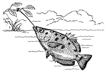 Illustration: Archerfish shooting water at a bug on a tree branch