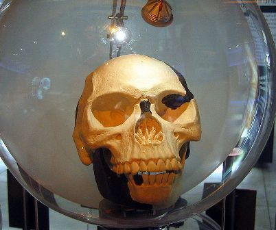 Replica of Piltdown man skull