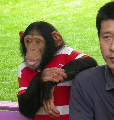 Chimp in Shirt next to a Man: WikiCommons