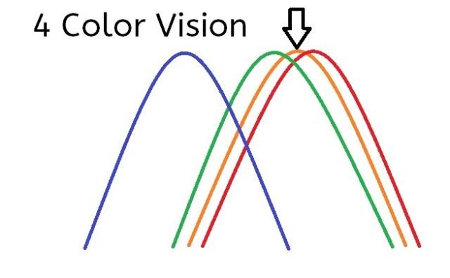 Wave lengths showing 4 color vision
