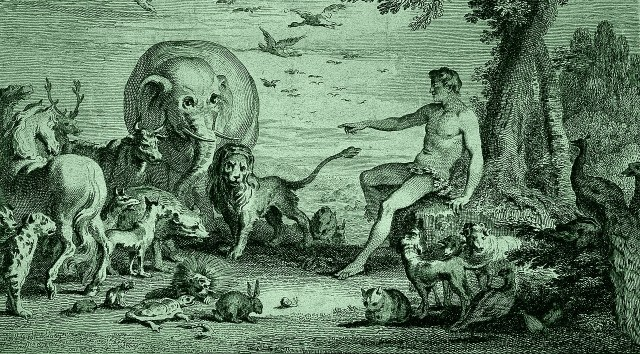 Etching of Adam naming the animals, Photo Credit: Wellcome Images