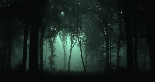 Gloomy Forest, photo credit: JovanCormac