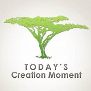 Today's Creation Moment logo