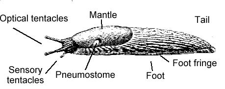 File:Slug parts.png