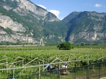 Vineyards I have seen while on the way to Lake Garda, Italy.