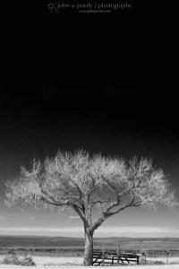 Art-Tree_and_Sky