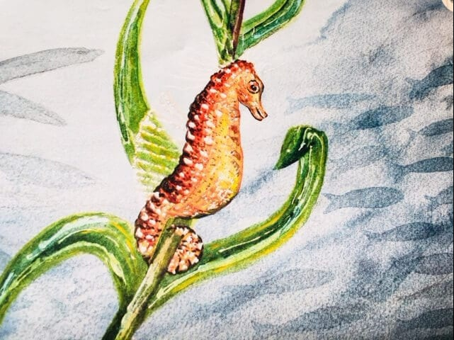 Aquarell: Seepferdchen