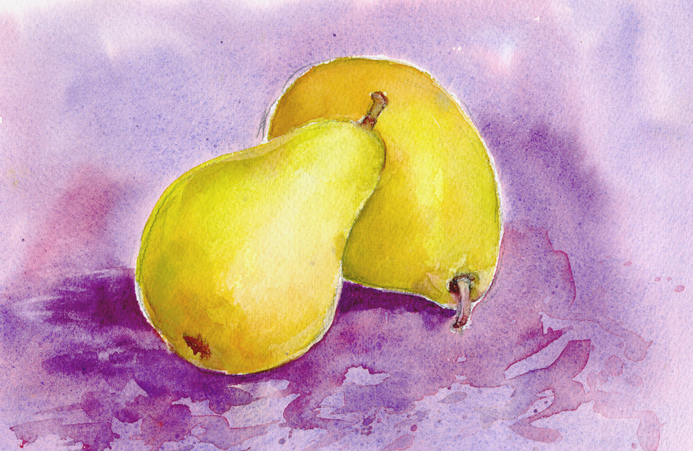 Anjou Pears.  Watercolor Study by Chris Carter