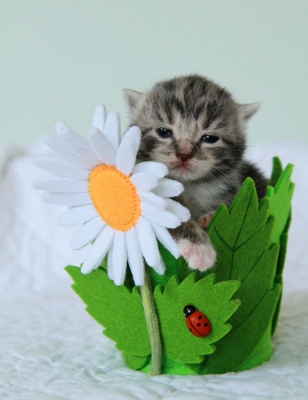 cute kitten creative competition