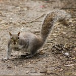 31 Days of Family Fun: Watch a Squirrel Day