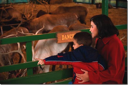 reindeer_hersheypark_Credit Hersheypark Entertainment and Resorts