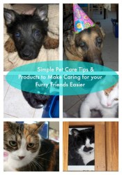 Pet Care Tips to Celebrate the Furry Friends in your Life on National Pet Owners Day