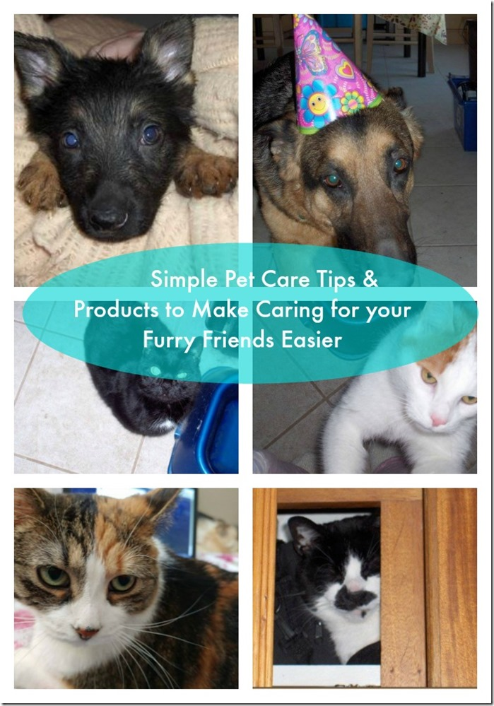 pet care tips and product recommendations