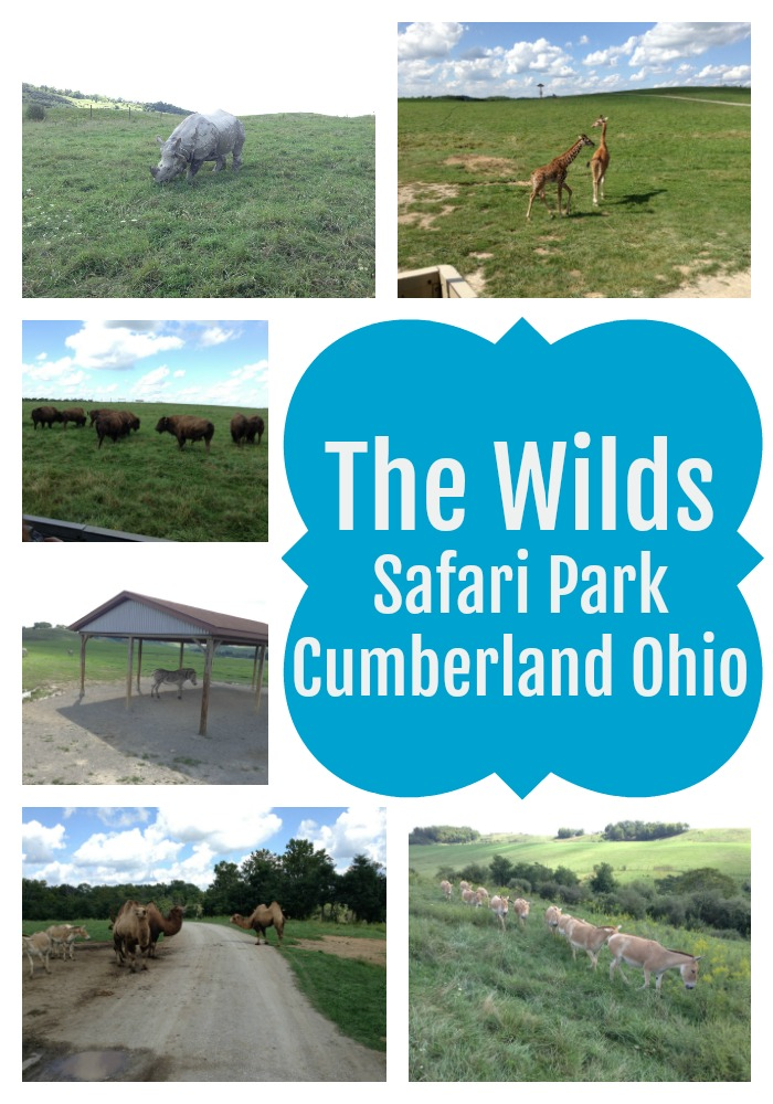 the wilds safari park cumberland ohio