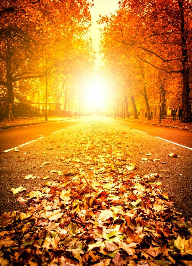 autumn outings southwest ontario