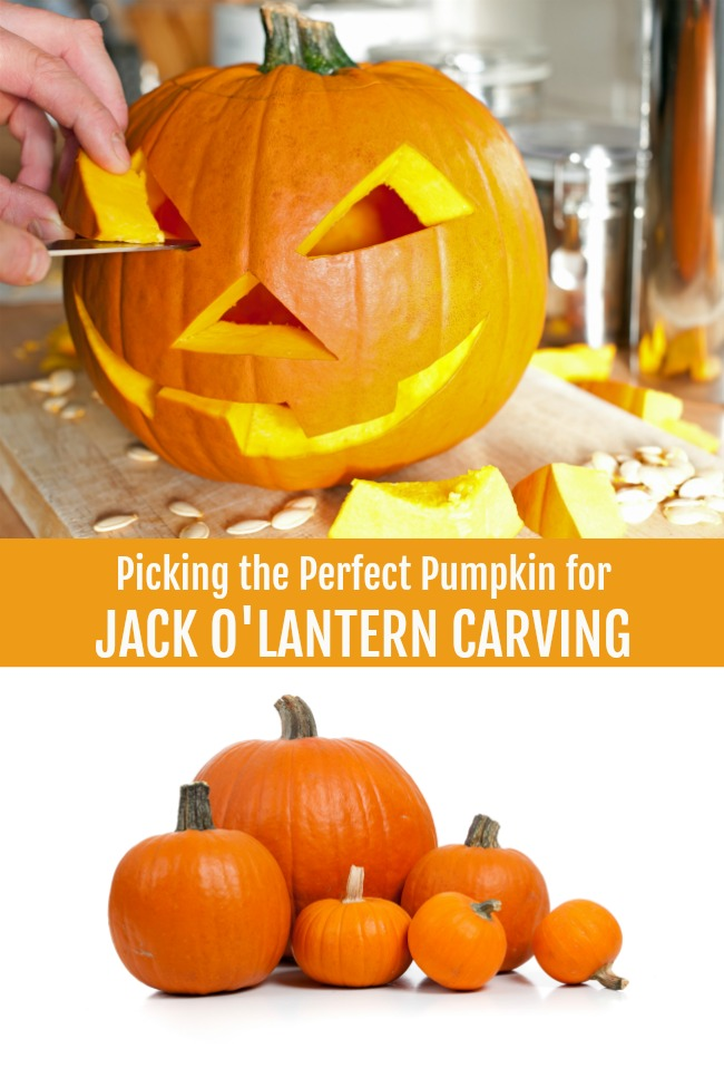 picking the perfect pumpkin for a jack o lantern