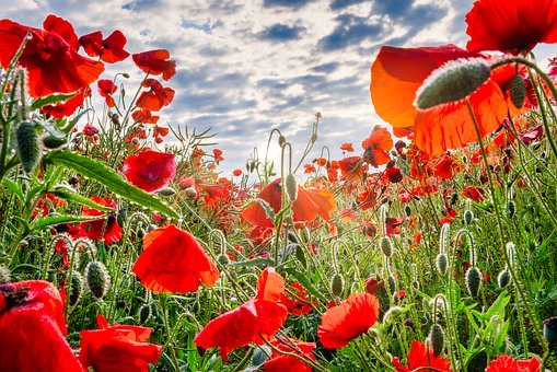 teaching children about remembrance day