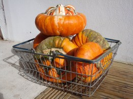 picture of a wire basketful of orange squashes