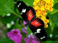 182484,xcitefun-butterfly009-1024x768
