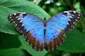 butterfly-world (2)