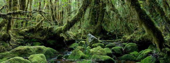 Panorama of patagonian temperate rain forest of Valle Cochamo