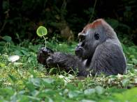 25-Most-Beautiful-Animals-Photography-StumbleUpon-9