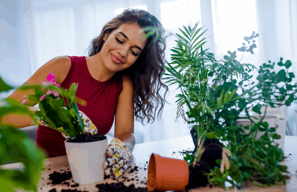 gifts for mom - plants